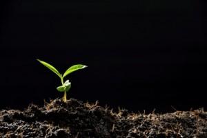 Plant Bursting 3-13-15