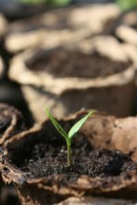 Growth 5-15-15